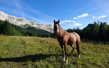 Equestrian farm of Vercors €10